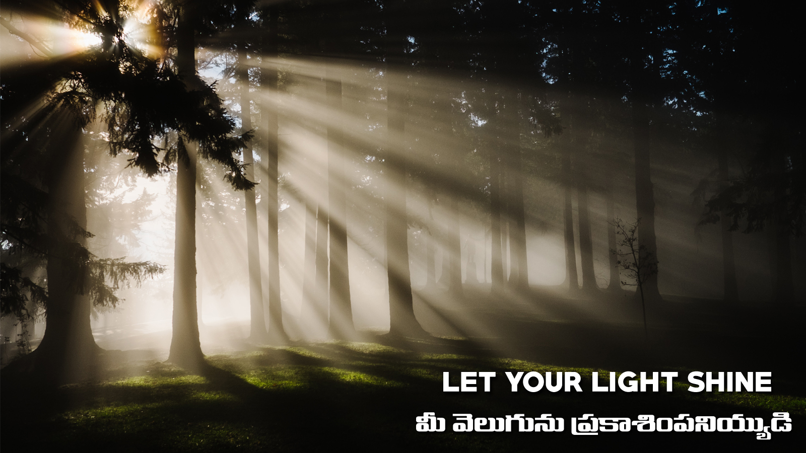 Let your Light Shine (A337)