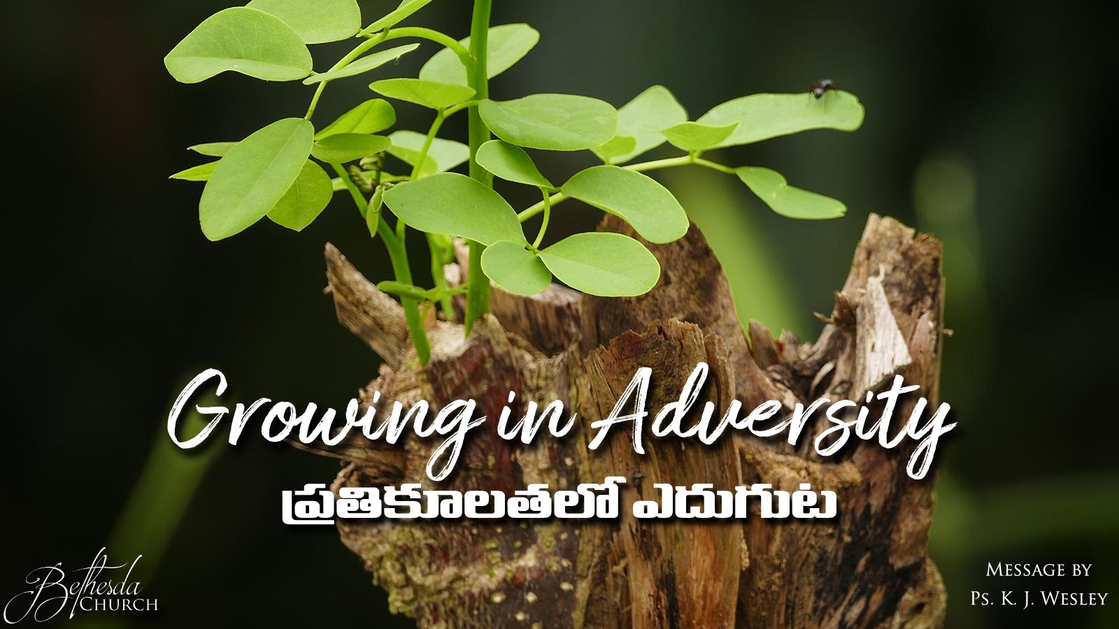 Growing in Adversity (A345)