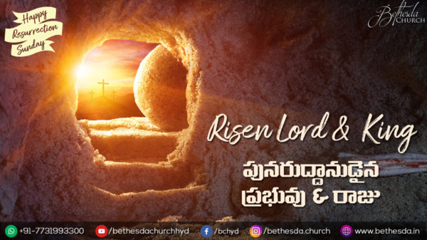 Risen Lord & King (A361)